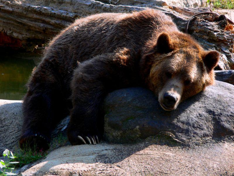 grizzli récréaneige cecl